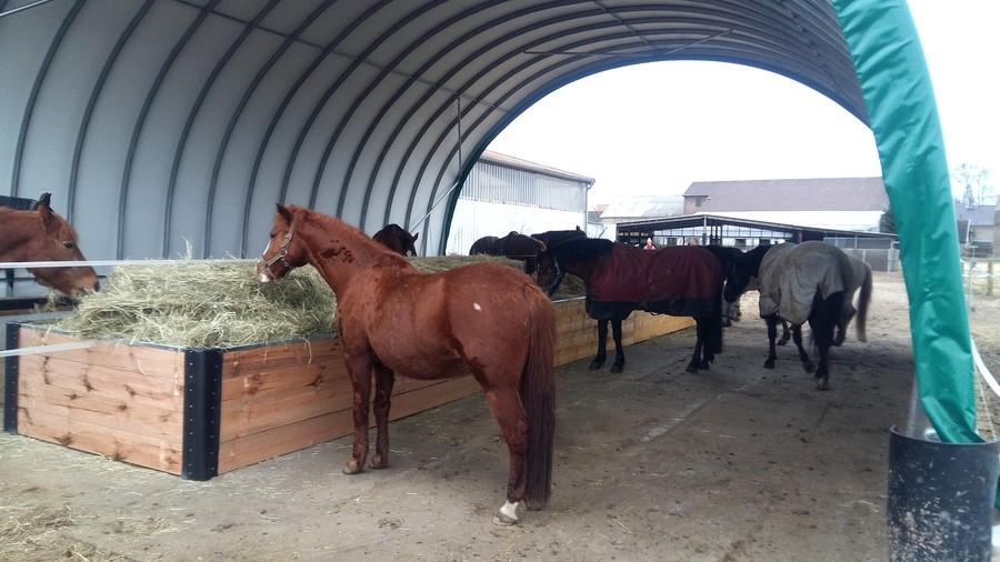 reitanlage gordon geselle offenstallhaltung 6 pferde. Black Bedroom Furniture Sets. Home Design Ideas
